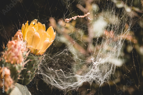 spider web on a yellow flower Wallpaper Mural