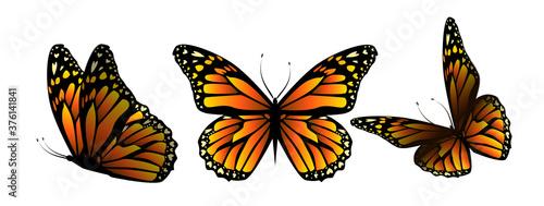 Flying orange butterflies. Vector illustration Canvas Print
