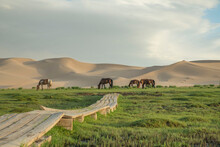 모래 언덕과 초원의 말