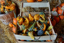Wood Crate Filled With Gourds Of Pumpkins, Squash, Melons All Harvested For Fall