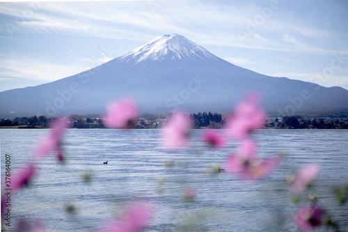 Obraz na plátně mt fuji in autumn
