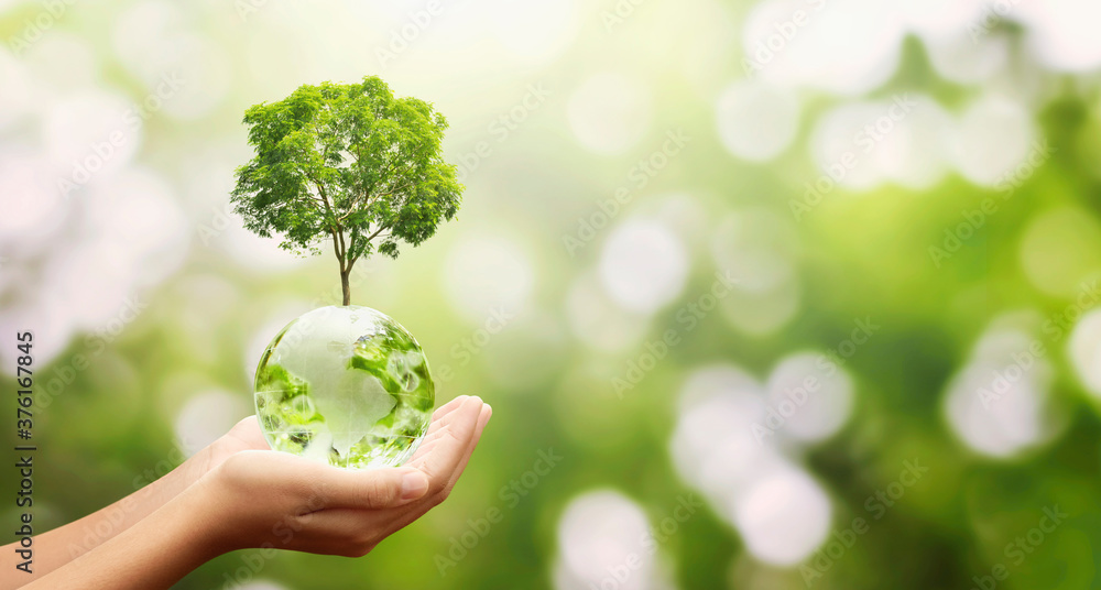 Fototapeta hand holding glass globe ball with tree growing and green nature background. eco environment concept