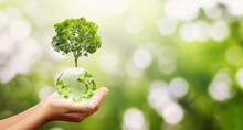 Hand Holding Glass Globe Ball With Tree Growing And Green Nature Background. Eco Environment Concept