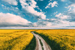 Elevated View Dramatic Sky With Fluffy Clouds On Horizon Above Rural Landscape Blooming Canola Colza Flowers Rapeseed Field. Country Road. Spring Field Agricultural Landscape