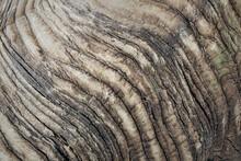 Interesting Texture On Big Ram...