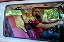 Young Bearded Man With His Labrador Retriever Traveling Together On Vintage Minivan Transport