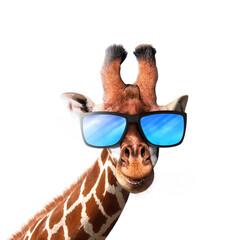 Smiling giraffe wearing a blue sunglasses