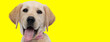 canvas print picture - Happy golden Labrador Retriever smiling and panting, wearing bowtie