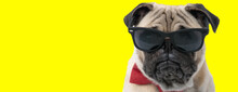 Bothered Pug Wearing Sunglasses And Bowtie, Looking Forward
