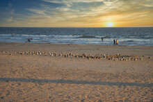 Sunset On A Summer Day At Pismo Beach California