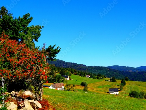 Europe, France, Great East, Alsace, Village of Orbey, view of the hamlets of Bas Wallpaper Mural