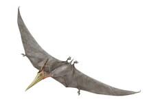 プテラノドン 翼竜類...