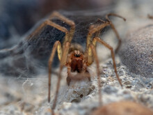 Closeup Shot Of A Brown Spider On A Blurred Background
