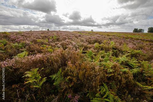 Obraz na plátně moorland landscape