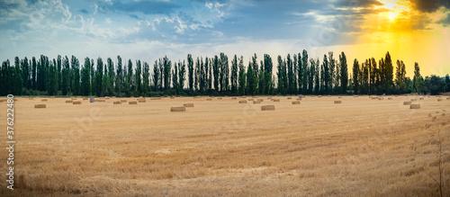 Fotografie, Obraz paisaje de campo castellano en verano en plena meseta