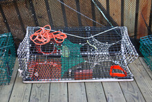 Lobsters Cage From Wire With R...