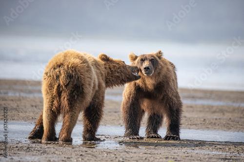 Photo Alaska, Lake Clark National Park, Seward, Homer