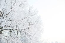 Winter Landscape In The City P...