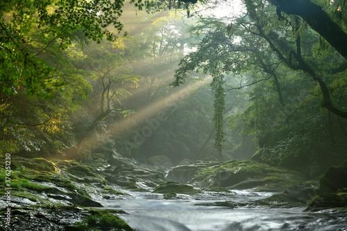 Fototapeta 菊池渓谷の光芒
