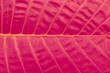 canvas print picture - Close up of tropical green big leaf texture. Background.