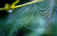 Spider Web On A Cool Morning. ...