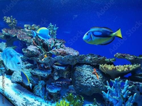 Fototapety, obrazy: Fische Aquarium