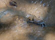 Crab In Its Habitat