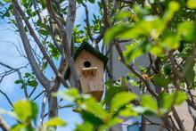 木に設置された鳥の巣箱