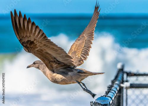 Foto Seagull photos