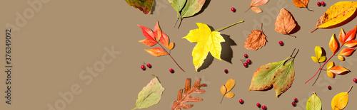 Fototapeta Colorful autumn leaves overhead view - flat lay obraz