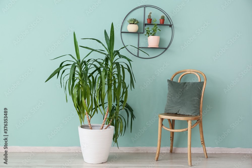 Fototapeta Interior of modern room with green houseplants and chair