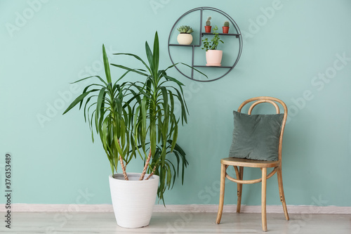 Obraz Interior of modern room with green houseplants and chair - fototapety do salonu