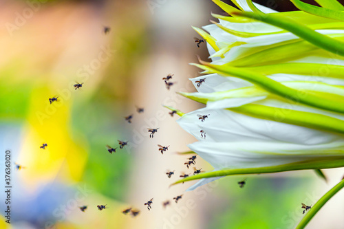 Photo Bees flying around flowers to find nectar