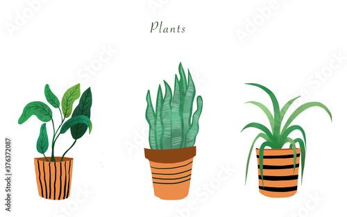 Fotografiet plants