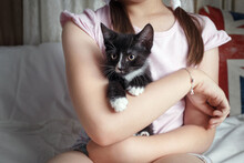 Kitten In The Arms