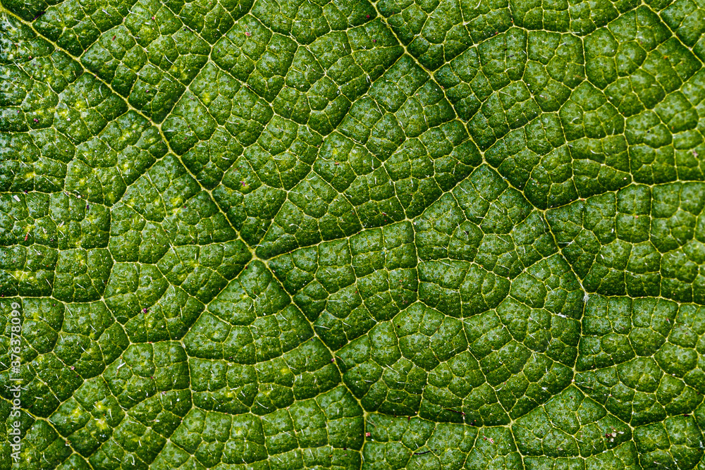 Fototapeta Close-up of a leaf textured background, beautiful nature texture concept