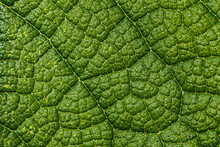 Close-up Of A Leaf Textured Ba...
