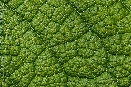 Obraz na plátně Close-up of a leaf textured background, beautiful nature texture concept