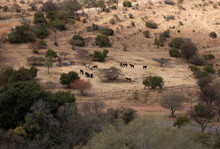 Landscape Of Veld In South Africa With Horses