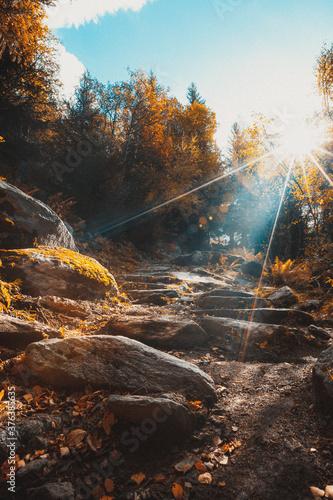 l'automne arrive et les feuilles tombent Canvas Print