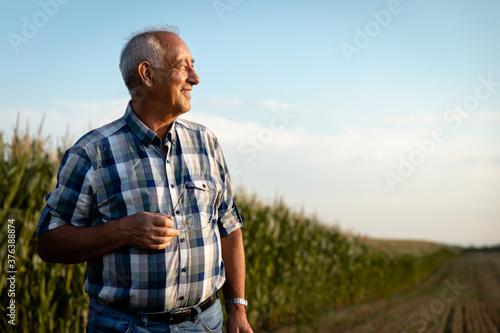 Portrait of senior farmer standing in corn field examining crop at sunset Fototapet