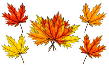Set Of Digital Sketch Maple Leaves And Bouquet. Arrangement Of Autumn Colored Foliage Isolated On White. Watercolor Imitation Bright Dark And Light Colors With Stains. Fall, Bundle, Natural Product