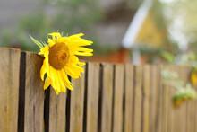 Yellow Sunflower Flower Behind...