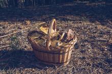 Basket Full Of Yellow Boletuses