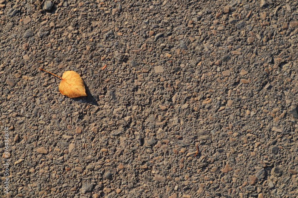 Fototapeta Liść na betonie