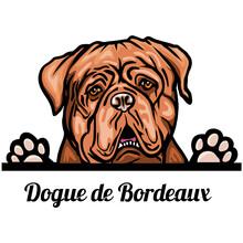Head Dogue De Bordeaux - Dog B...