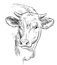 Head Of Beauty Cow Hand Drawing Illustration