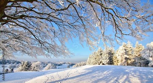Fototapeta Paysage recouvert de neige, arbres, neige, hiver, ciel,froid