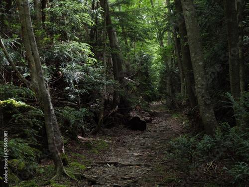 Fotografie, Obraz 奥日光の切込湖・刈込湖~涸沼のハイキング道