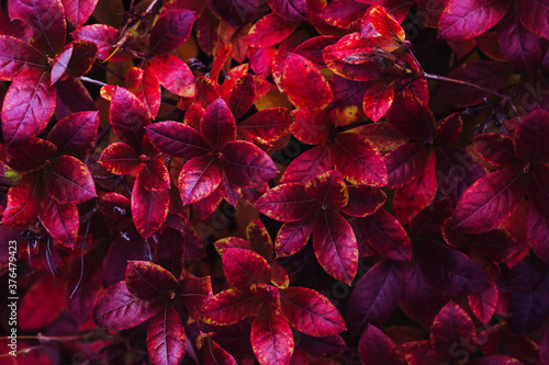 Red leaves autumn natural background Fotobehang
